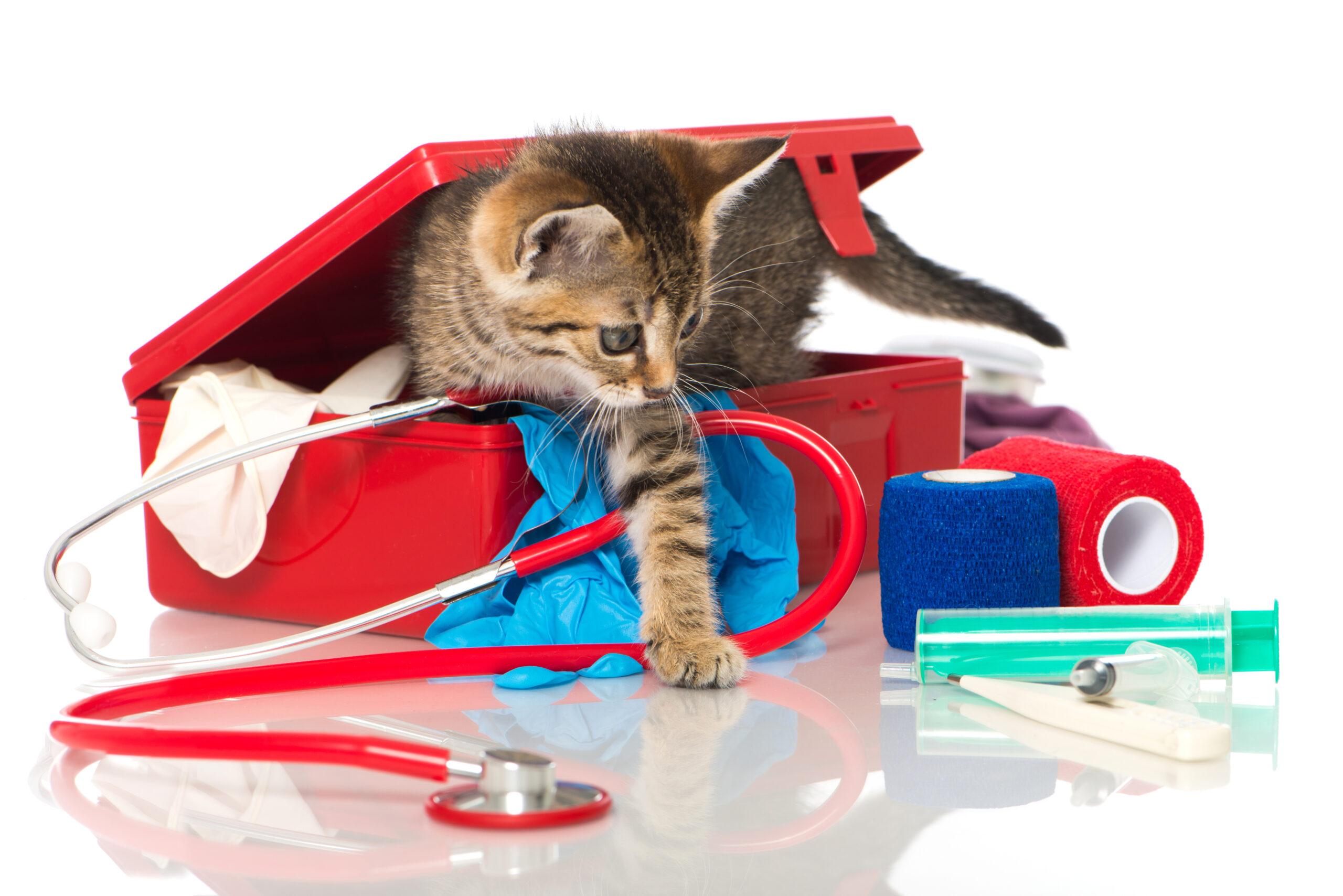 Zapobieganie chorobom u psów i kotów.