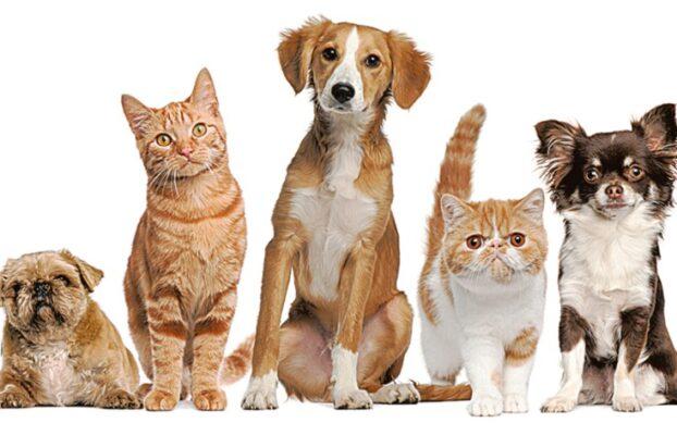 Sterylizacja zwierząt – krzywda czy dobry uczynek?