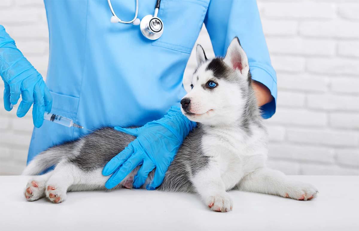 Szczepienie psów i kotów – jak dobrze szczepić nasze zwierzęta?!