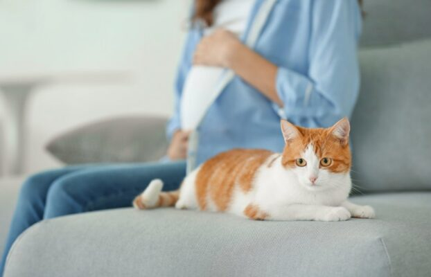 Toksoplazmoza – czy koty domowe są tak niebezpieczne?