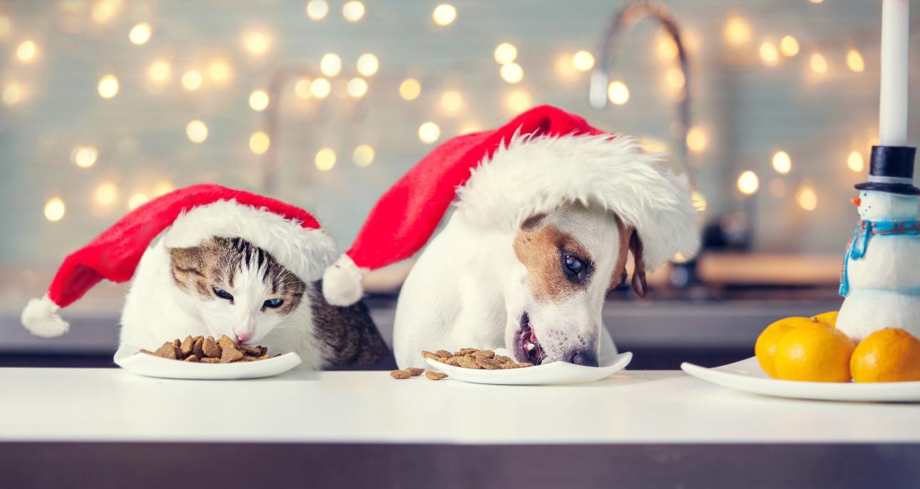 Wigilia dla psa i kota – jak skomponować wigilijną dietę dla naszego pupila?