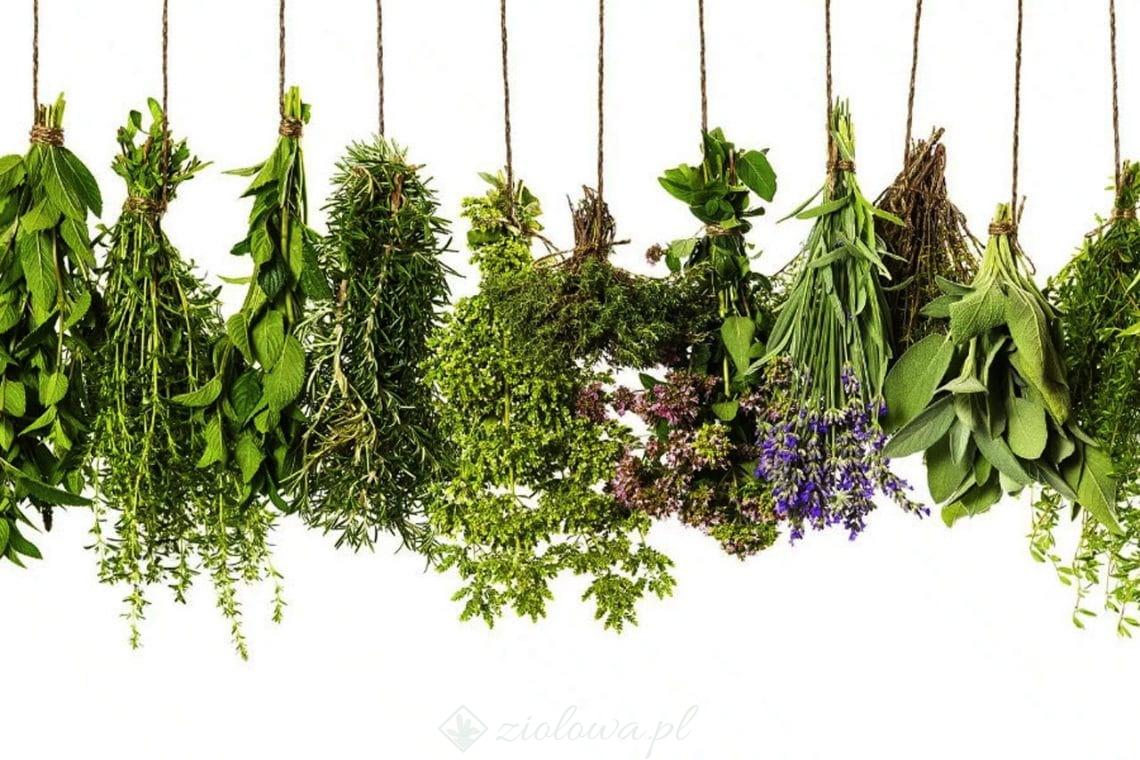 Co to jest ziołolecznictwo?