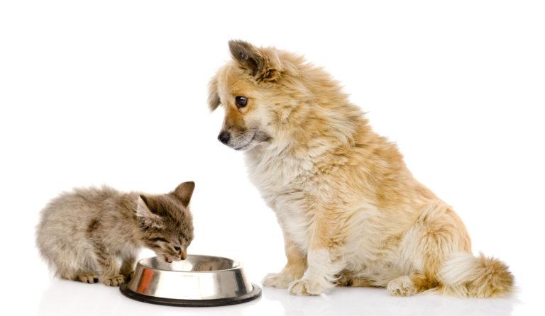 Podstawowe wiadomości o żywieniu psów i kotów.